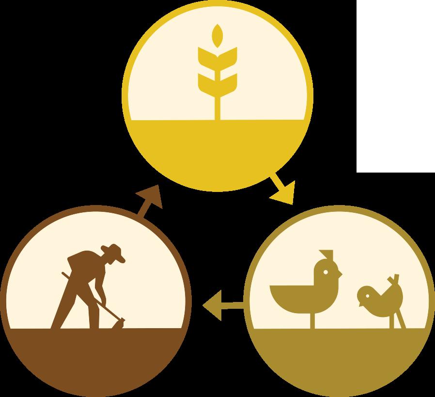 Farm Cycle icon