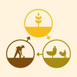 Grain Cycle e1601410799447